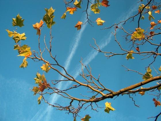 autumn-1565052