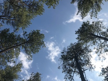 Trees in the sky